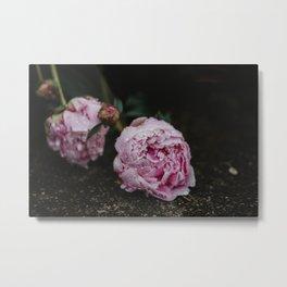 Pink Peony After Rain I Metal Print
