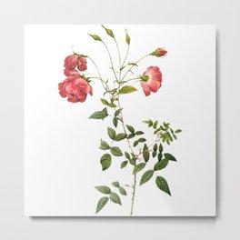 Vintage Roses [05] Metal Print