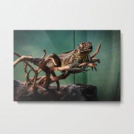 Languid Lizard Metal Print