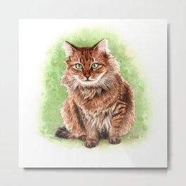 Somali cat portrait Metal Print