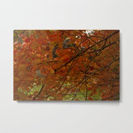 Red Maple 2017 Metal Print