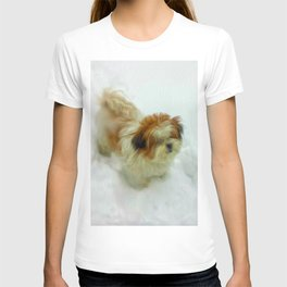 Chewy in snow T-shirt
