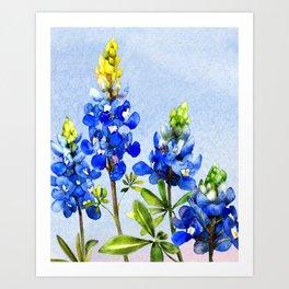 Bluebonnets 1 Art Print