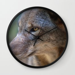 Red Wolf Stares Wall Clock