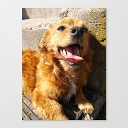 Smiling Puppy Canvas Print