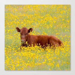 Baby Cow Canvas Print