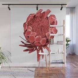 Australian Native Floral Illustration - Beautiful Protea Flower Wall Mural