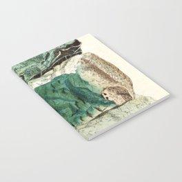 Vintage Mineralogy Illustration Notebook