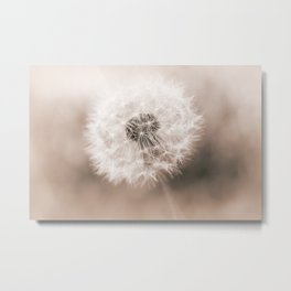 Spring Dandelion in Sepia Metal Print