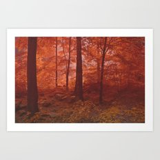 Fog-Wood Art Print