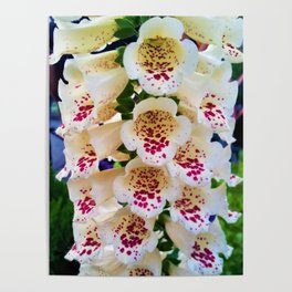 Lovely Spotted Flowers 2 Poster