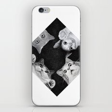 When you are kitten in the box iPhone & iPod Skin