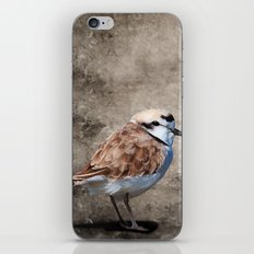 Western Snowy Plover iPhone & iPod Skin