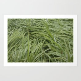 California Grass & Dew Art Print