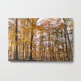 North Georgia Fall Colors Metal Print