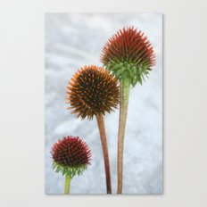 Stripped Echinacea Canvas Print