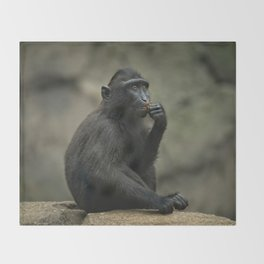Celebes Crested Macaque Youngster Throw Blanket