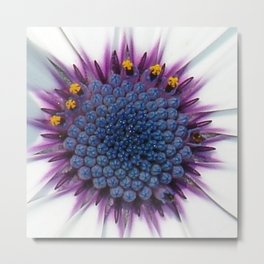 Stunning African Daisy Tropical Flower Macro Metal Print