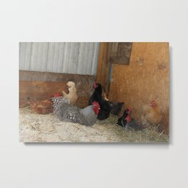 Hens and Rooster Metal Print