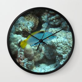 Checkerboard wrasse with cleaner wrasse Wall Clock
