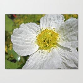 white poppy bloom XIX Canvas Print