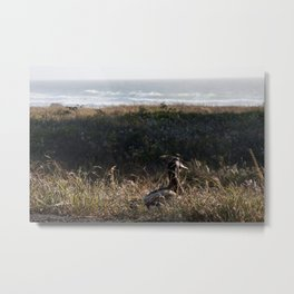 The duck on its way to the ocean Metal Print