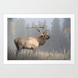 Bull Elk One Art Print