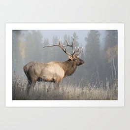 Bull Elk One Art Print