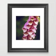 Pink Foxglove Framed Art Print