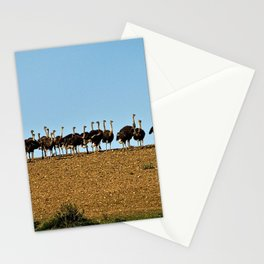 Ostriches in a Row African Birds, South Africa Stationery Cards