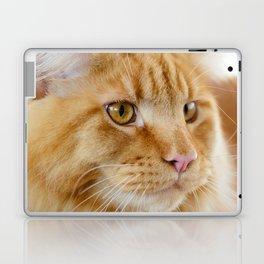 Maine Coon cat Laptop & iPad Skin