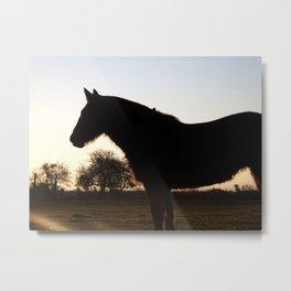 Backlit horse Metal Print