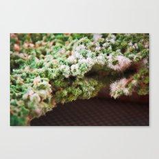 upper crust III Canvas Print
