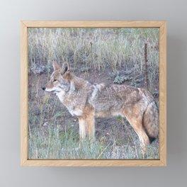 Watercolor Coyote Framed Mini Art Print
