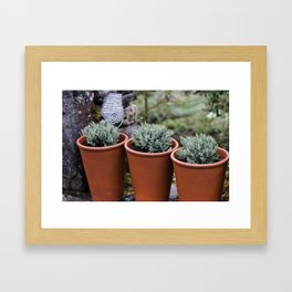Potted Lavender Framed Art Print