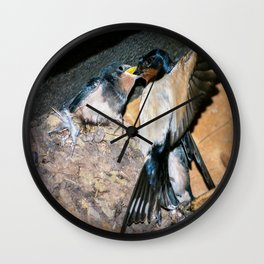 Swallow feeds chick. Wall Clock