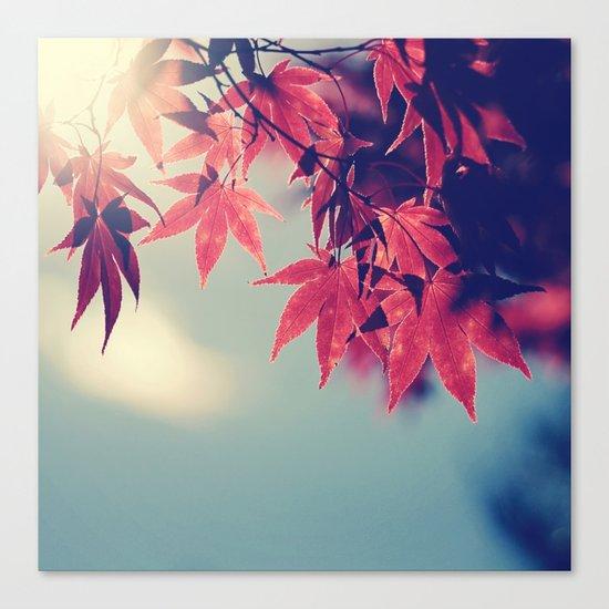 Maple Light Canvas Print