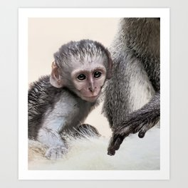 New born baby monkey Art Print