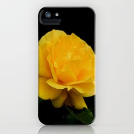Golden Yellow Rose Isolated on Black Background iPhone Case