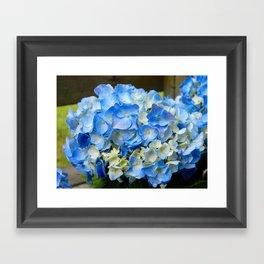 Hydrangea Flowers 3 Framed Art Print