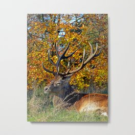 Red Deer Resting Metal Print