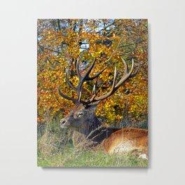 Red Deer Resting Metal Print