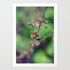 The Summer Bug Art Print
