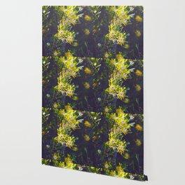 Australian Spring Wallpaper