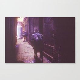 Following the light (Varanasi,India) Canvas Print