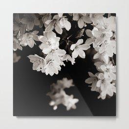 Little Whites ~ No.1 Metal Print