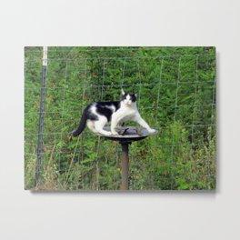 Cat Akimbo Bird Bath Metal Print