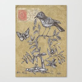 Vintage Birds and Bugs Canvas Print