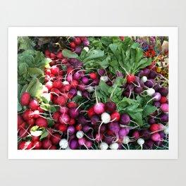 Garden Radishes Art Print