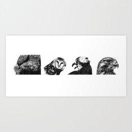 Birds of Prey Art Print
